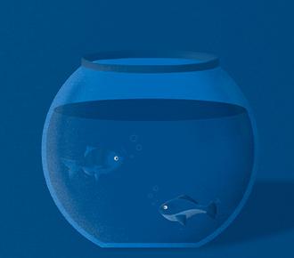 Aquário com dois peixes dentro.